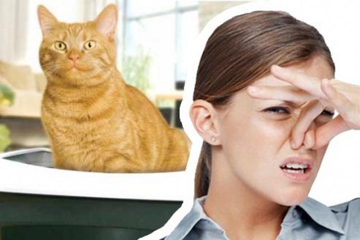 Запах мочи домашних животных в Вязниках