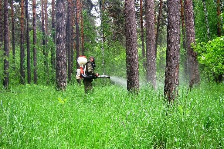 Обработка от клещей лесных массивов в Вязниках